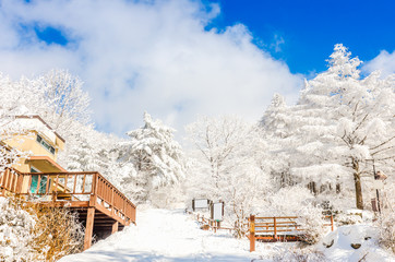 winter landscape in the mountains with falling snow in Seoul,South Korea.