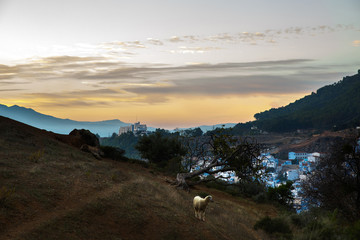 Lonely goat stands on the hill before beautiful landscape of evening sky over city in Morocco