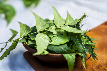 Azadirachta indica,Neem with its leaves in a clay bowl for skin care.