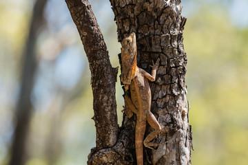 Lizard climbing a tree. Wall mural