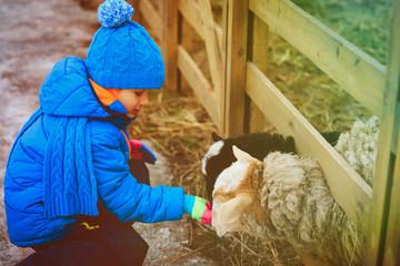 little boy feeding goat at farm