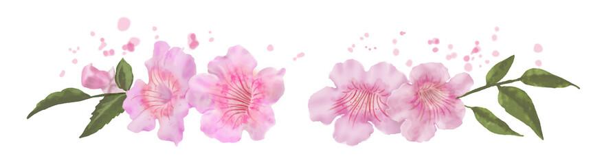 Chitalpa, Tashkentensis, flores rosas