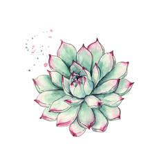 Cactus succulent plant isolated on white background, watercolor botanical illustration, decorative plant