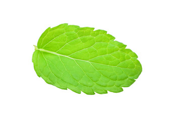 Peppermint or mint leaf isolated on white background