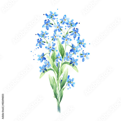 Bouquet Of Blue Wild Forget Me Not Flowers Isolated On White