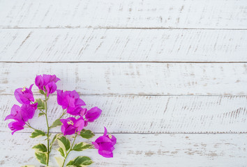 Purple flowers on white wooden background.