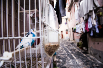 Budgerigar in cage on street, Sao Tome, Sao Tome and Principe