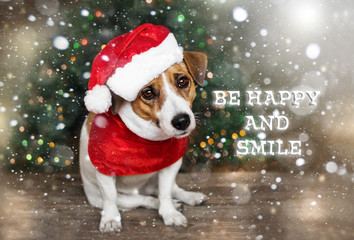 A small dog jack russel terrier in a red cap siting near the Christmas tree under the falling snow and looking into the camera. Merry Christmas and Happy New Year card. Be happy and smile