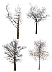 four bare trees set isolated on white