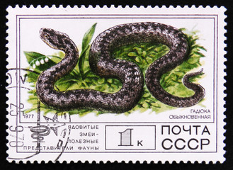 MOSCOW, RUSSIA - APRIL 2, 2017: A post stamp printed in Soviet Union shows Lebetina viper, Poisonous snakes series, circa 1977