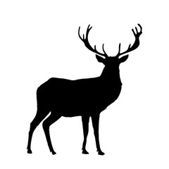 Black silhouette of reindeer with big horns isolated on white background.