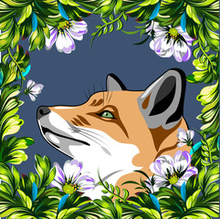 fox sitting in a thicket of poppies and daisies