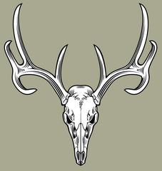 horned deer skull