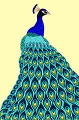 Portrait of a peacock with a beautiful tail