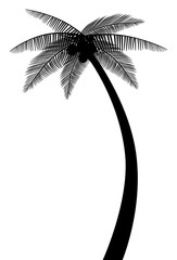 palm tree silhouette vector eps 10