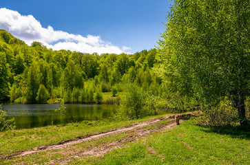pond among the forest on fine spring day. lovely nature scenery in mountains