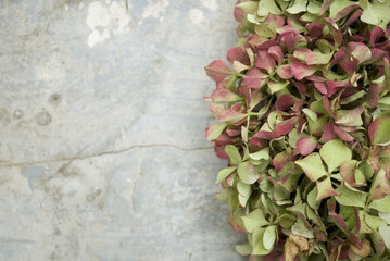 background: garland (wreath) made of ortensia flowers (Hydrangea), colorful because they are picked fresh in autumn (green, pink, beige), leaning on old wooden table painted light blue, Autumn, Italy
