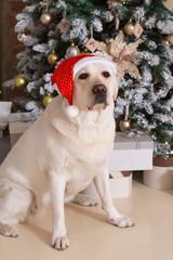 Dog in a Santa hat sits under a Xmas tree