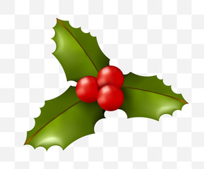 Christmas Time! Holly on Transparent Background. Isolated Vector Illustration
