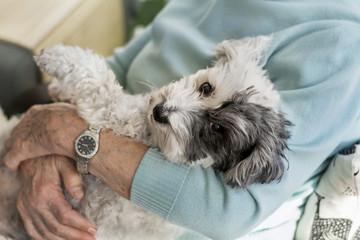 Senior Woman Hugging her Poodle Dog at Home.