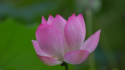Search Photos 4k Landscape Attraction Pond Blooms Single Day
