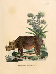 Illustration of Rhino
