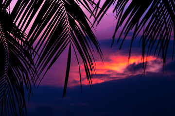 Asian tropic exotic sunset near palms and sea beach