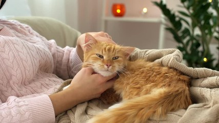 Fototapete - woman stroking red tabby cat in bed at home