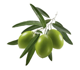 3 green olives branch isolated on white background