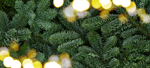 Christmas background with fresh evergreen tree banches banner