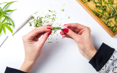 Girl wrapping marijuana joint top view