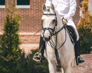 White arabian dressage horse and rider in white uniform at show jumping competition. Equestrian sport background. Grey 	thoroughbred horse portrait during dressage competition.