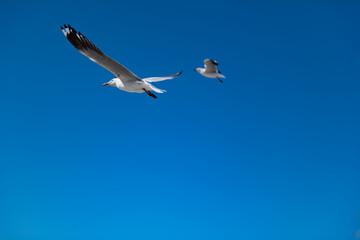 fliegende Möwe im Himmel