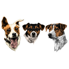 three dogs Jack Russell Terrier a set of Christmas gifts sketch vector graphics color picture