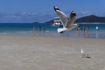 Möve im Strandflug