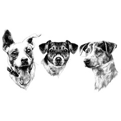 three dogs Jack Russell Terrier a set of Christmas gifts sketch vector graphics monochrome black-and-white drawing