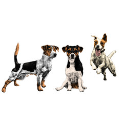 three dogs Jack Russell Terrier a set sketch vector graphics color picture