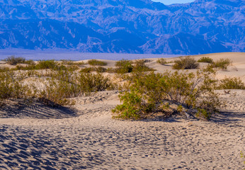 Beautiful Mesquite Sand Dunes at Death Valley California