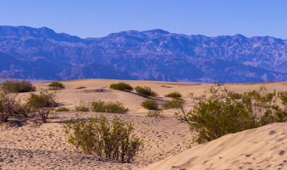 Beautiful landscape of Mesquite Flat Sand Dunes at Death Valley