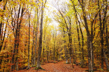 Autumn forest, path in the forest