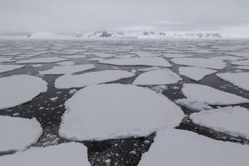 Foto auf Acrylglas Antarktis Packeis im Crystal Sound