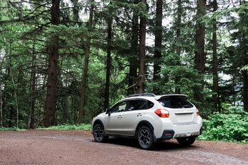 4x4 white car on dirt road in forest trees