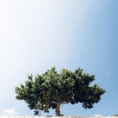 Alleinstehender Baum