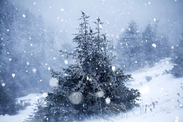 Trees covered with hoarfrost and snow in winter mountains - Christmas snowy backgroundic holiday background