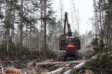 Deforestation, logging, woodworking, timber storage, deforestation in the taiga