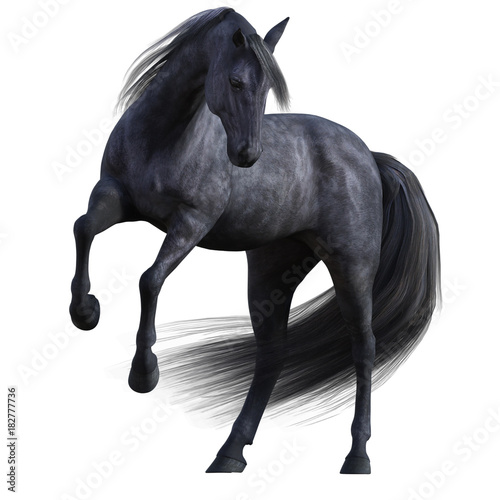 Black Stallion Horse isolated on white.