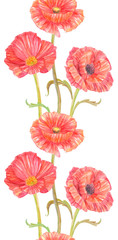 seamless border with nice poppies on white background. watercolor painting