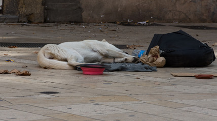 Emaciated Homeless Dog lying on a dirty blanket with litter and empty bowls nearby.