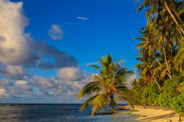 Tropical maldivian beach with palm and blue ocean