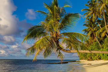Morning tropical maldivian beach with palm and blue ocean